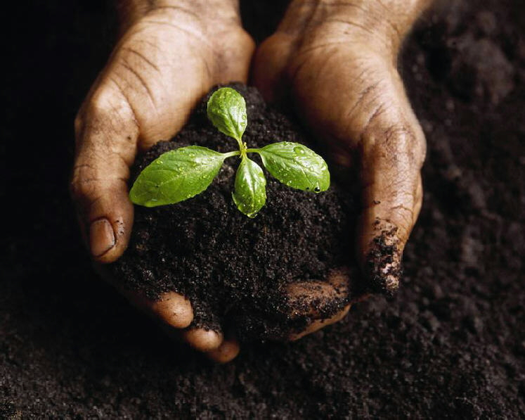 Compost Theology: The Garden Variety
