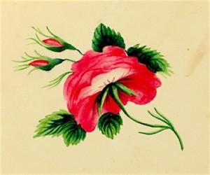 Douglass-sketch-floral1