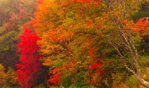 Foliage-2.