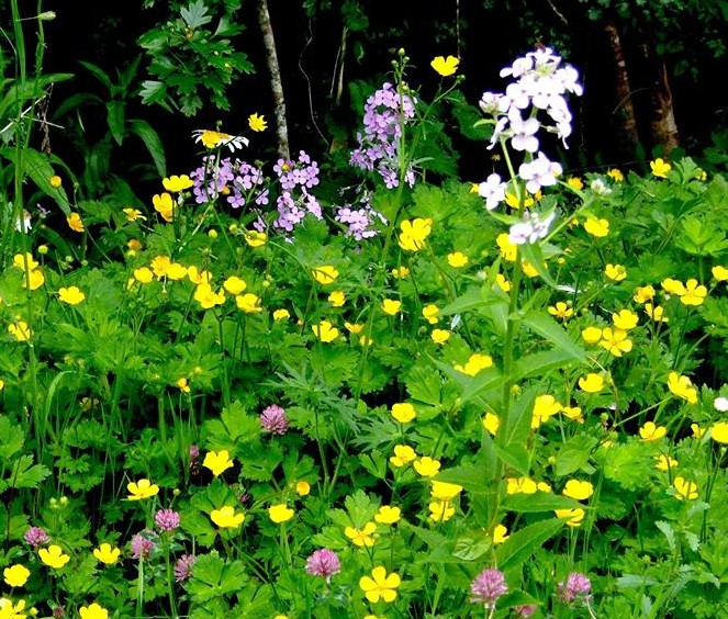 Irish Mystery Flowers
