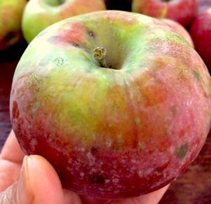 Quakerism: Taking A Bite Of The Apple