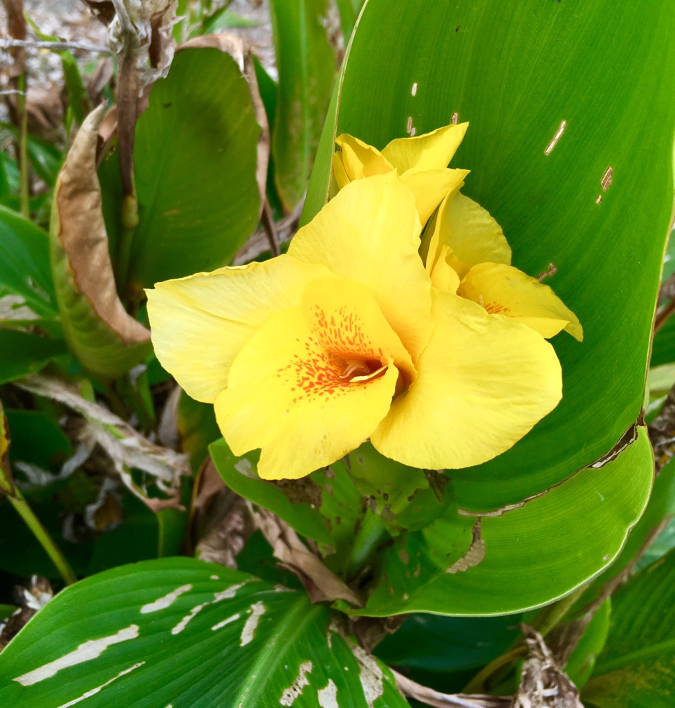 yellow-flower-from-outside