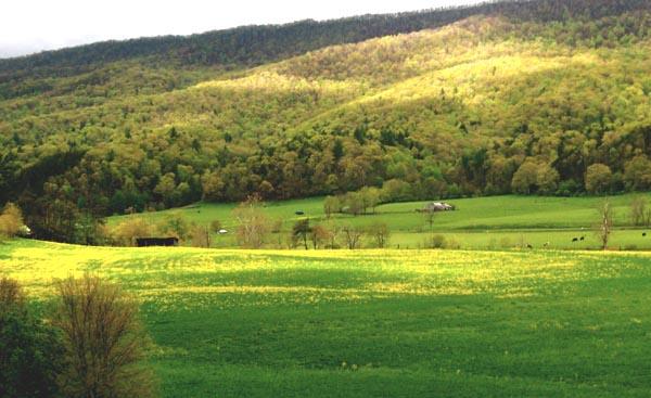 mustard-field-2